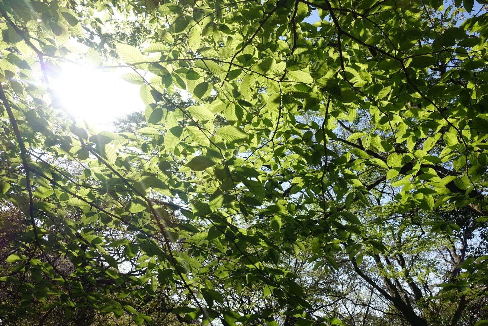茨城で無垢の木の家に住む贅沢を実現しよう