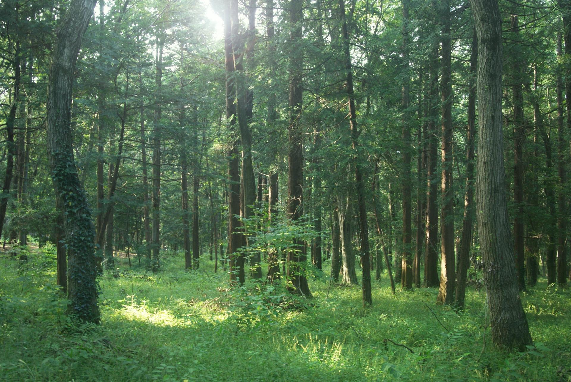 森に手を入れることが森をよみがえらせること